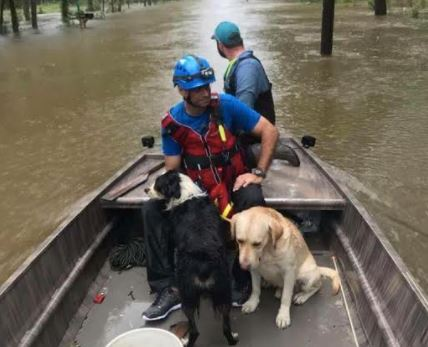 Volunteers for the Islamic Society of Greater Houston rescue dogs trapped in Hurricane Harvey.
