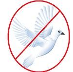 no_peace